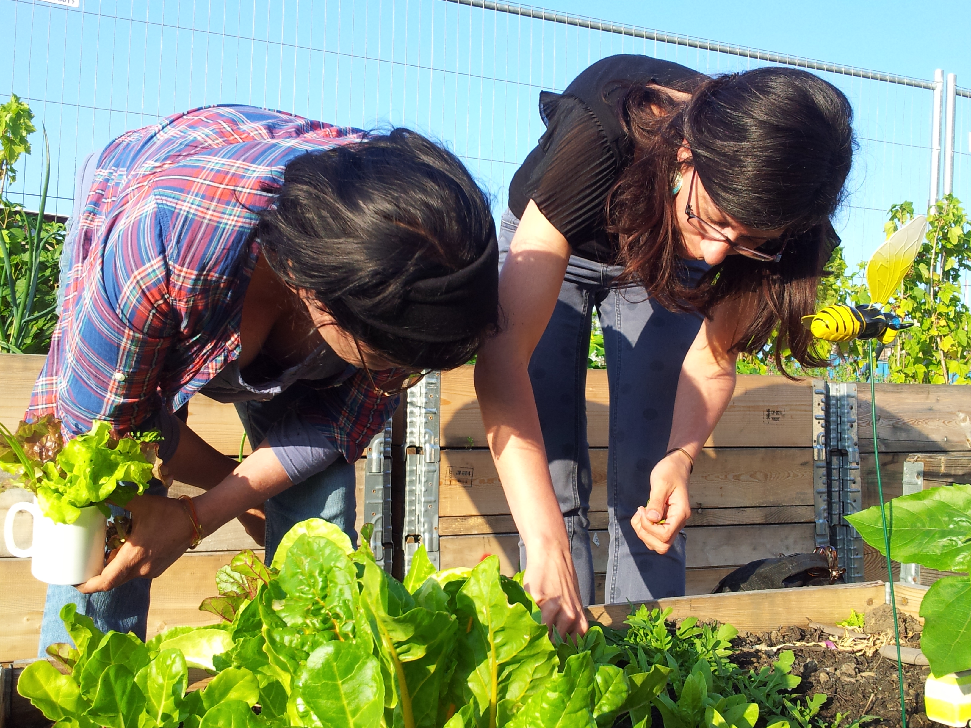 Gardeners in the Grove Community Garden