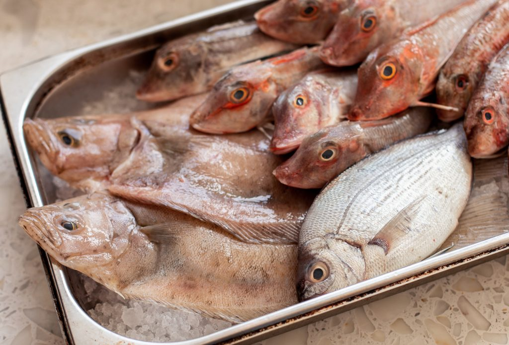 A tray of freshly caught fish