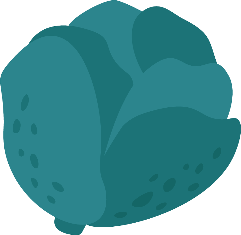 Illustration of a cabbage