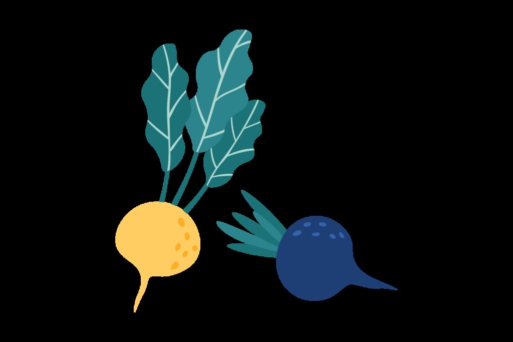Illustration of root vegetables