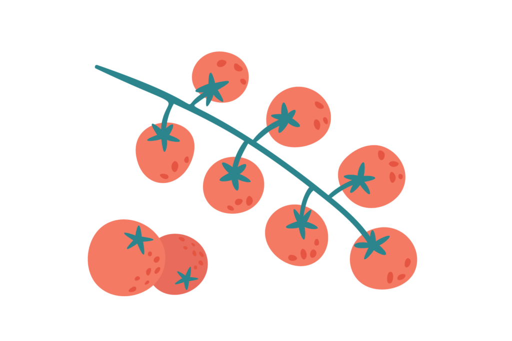 Illustration of tomatoes on the vine