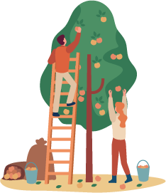 Illustration of a couple harvesting apples from a tree